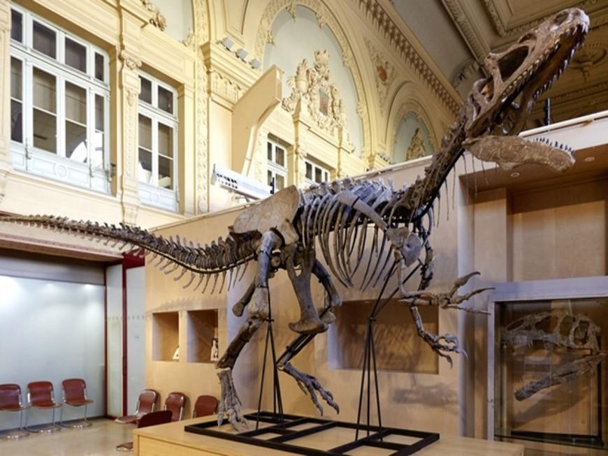 A vendre ce samedi à Lyon : squelette quasi complet d'Allosaurus !