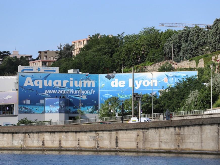 Aquarium de Lyon : trois requins d'une espèce quasi menacée sont nés