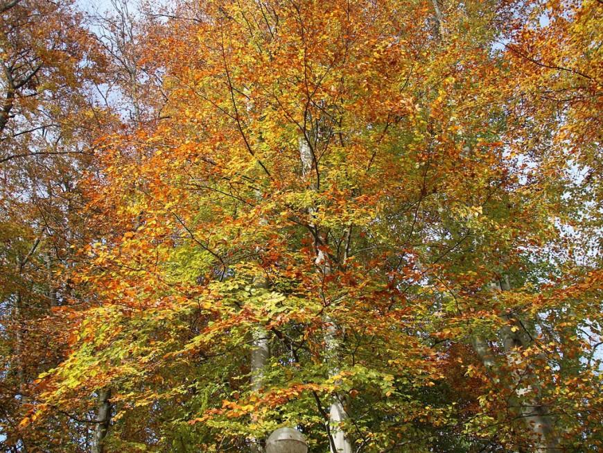 Lyon : à vos arbres citoyens !