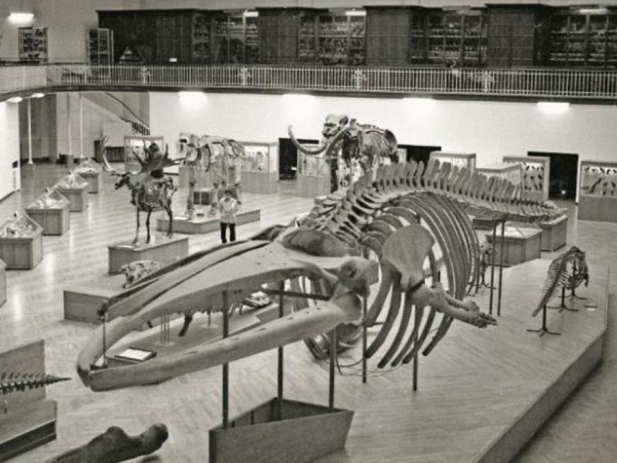 La baleine du musée des Confluences va retrouver son public