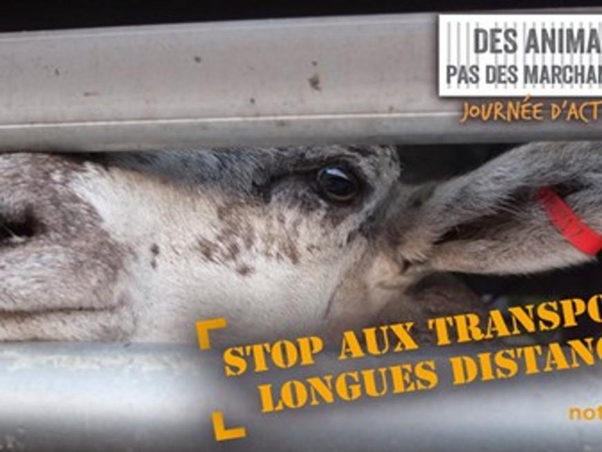 Une manifestation contre les transports d'animaux ce lundi à Lyon