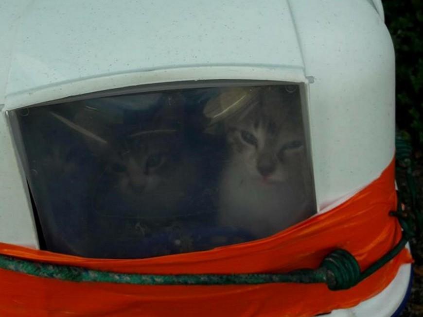 Rhône : 5 chatons enfermés dans une litière abandonnés en plein soleil devant la SPA