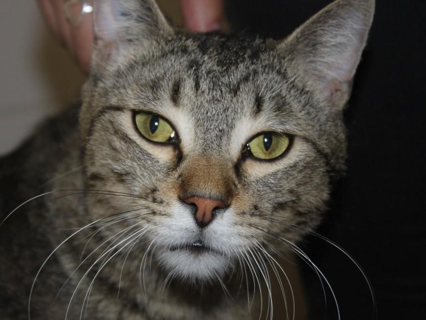 Un chat disparu à Lyon retrouvé par sa propriétaire sept ans plus tard