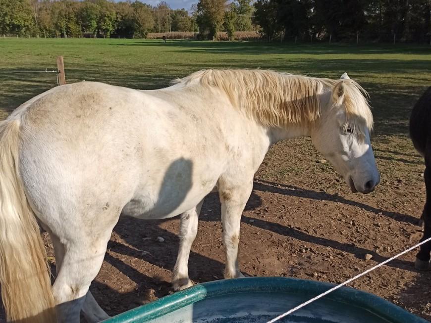Près de Lyon : un cheval meurt renversé par une voiture