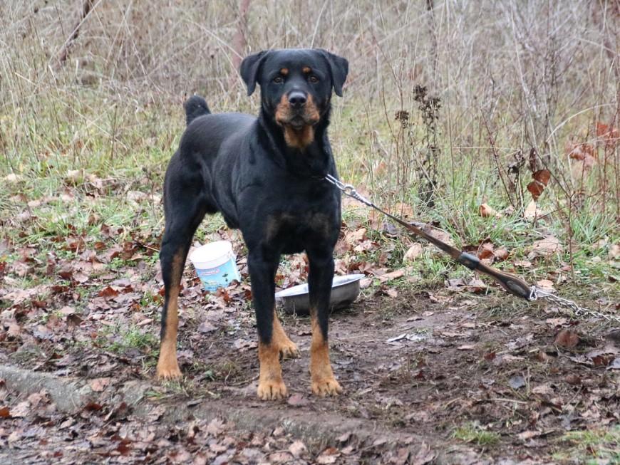 Villefranche : il ne supporte plus le chien de sa voisine et tire un coup de feu en l'air