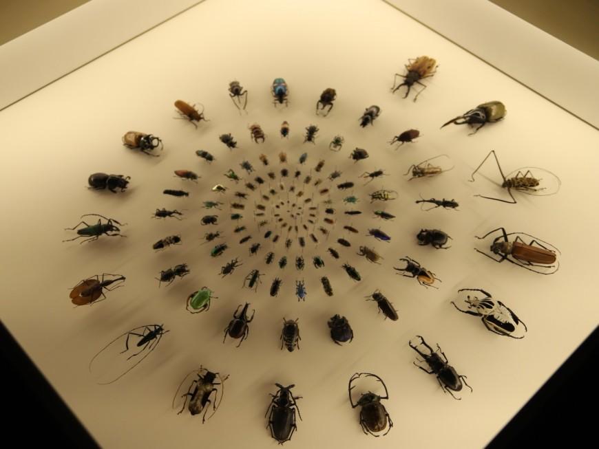Des coléoptères envahissent le Musée de Confluences