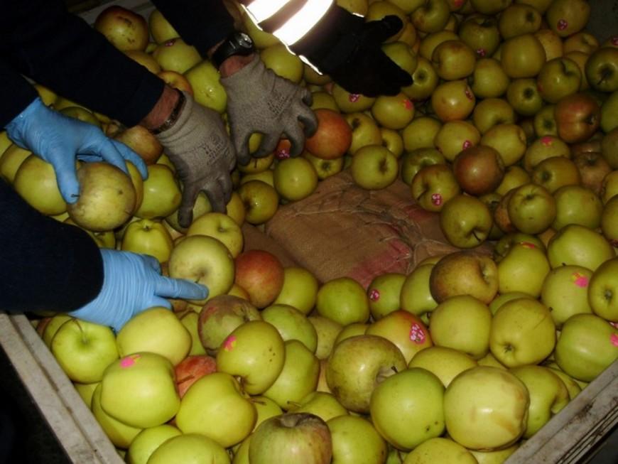 Lyon : 13 tonnes de fruits servant à cacher des stupéfiants remis à la Banque alimentaire