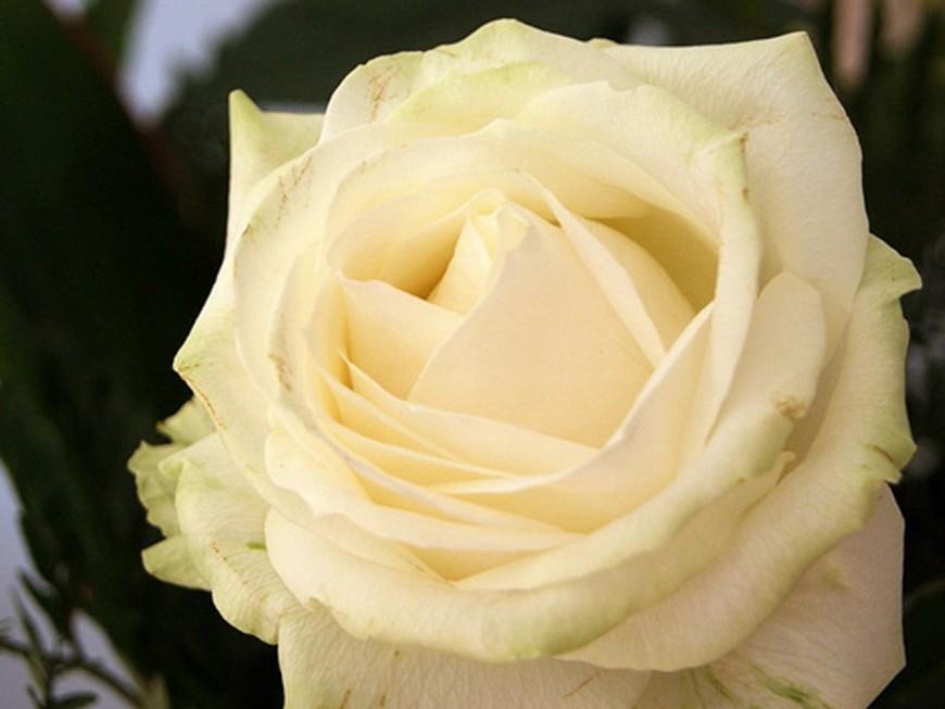 Drame familial à Limonest : un hommage ce mercredi à Allyah et Lina
