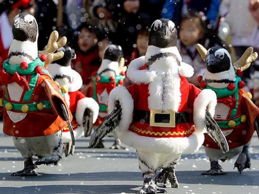 De nouveaux pingouins de Noël installés à Genas, 2 semaines après leur rapt