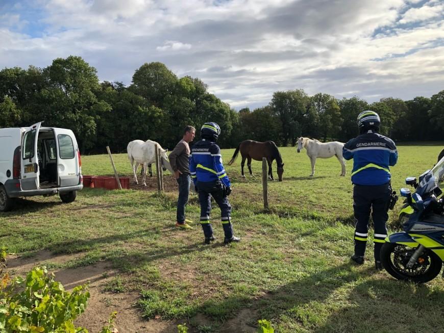Chevaux mutilés : les gendarmes du Rhône surveillent les pâturages