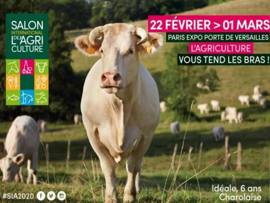 Idéale, vache égérie du salon de l'agriculture, arrive tout droit du Rhône !