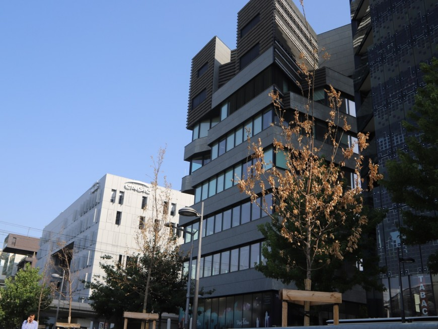 Canicule : les nouveaux arbres de la Confluence souffrent de la chaleur