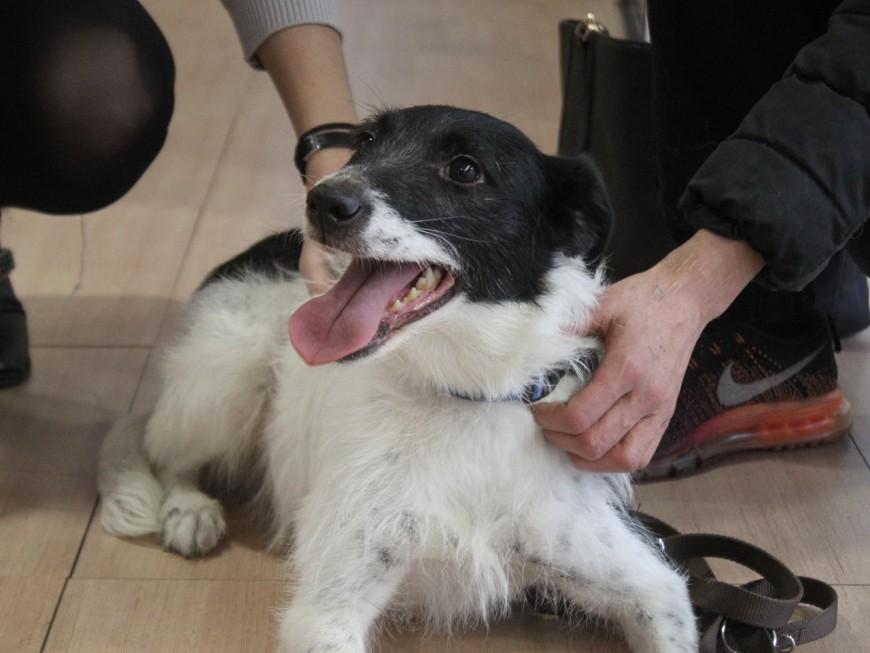 Bulle, la chienne abandonnée à Bron, a repris du poil de la bête