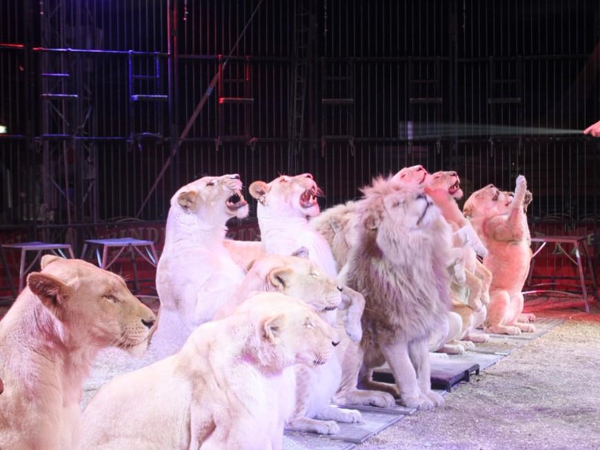 Lyon : une pétition réclame à Gérard Collomb l'interdiction des cirques d'animaux sauvages
