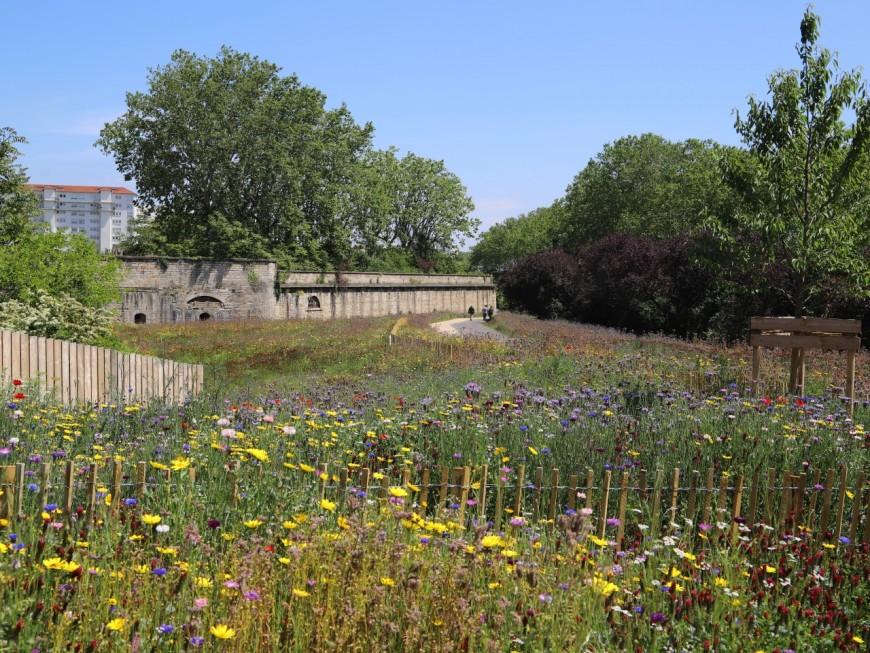 Après 16 mois de travaux, le parc Blandan s'agrandit - VIDEO