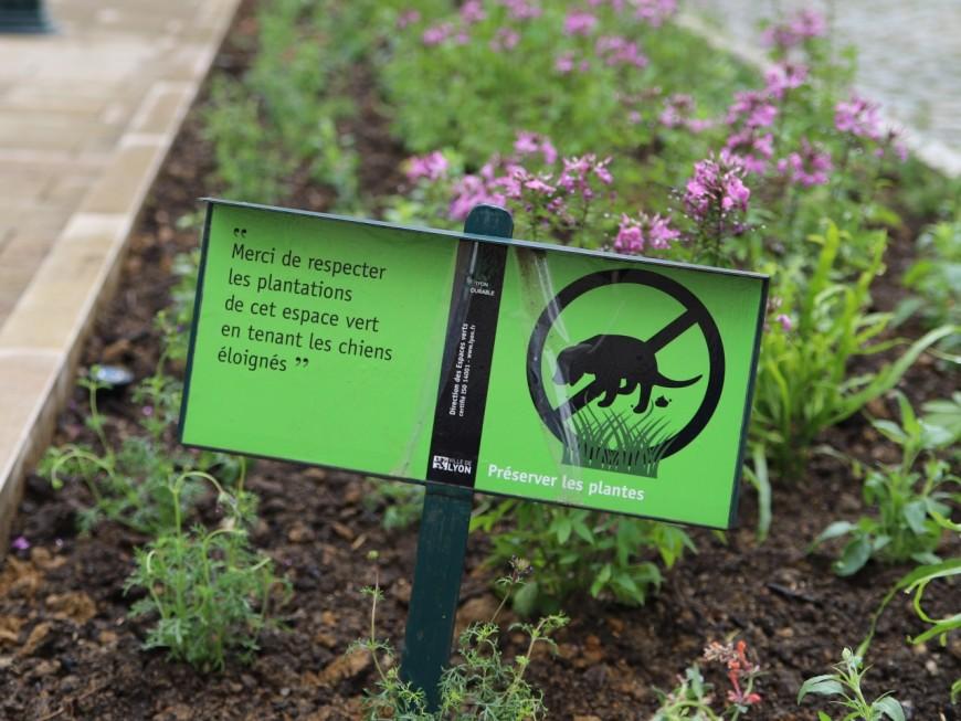 Les jardiniers de la mairie du 2e agacés par les crottes de chien dans les fleurs