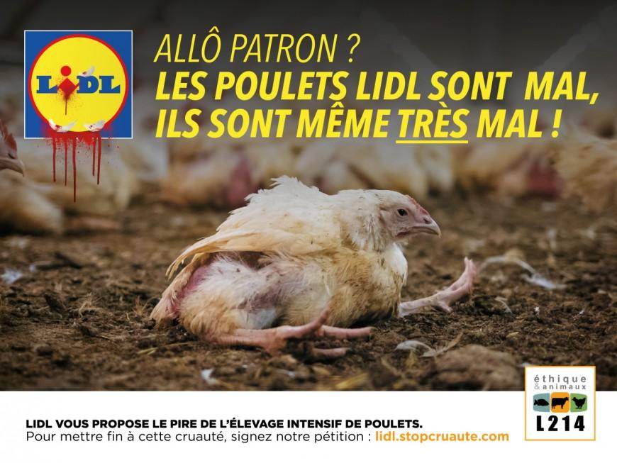 Lyon : L214 s'attaque aux conditions d'élevage des poulets vendus chez Lidl