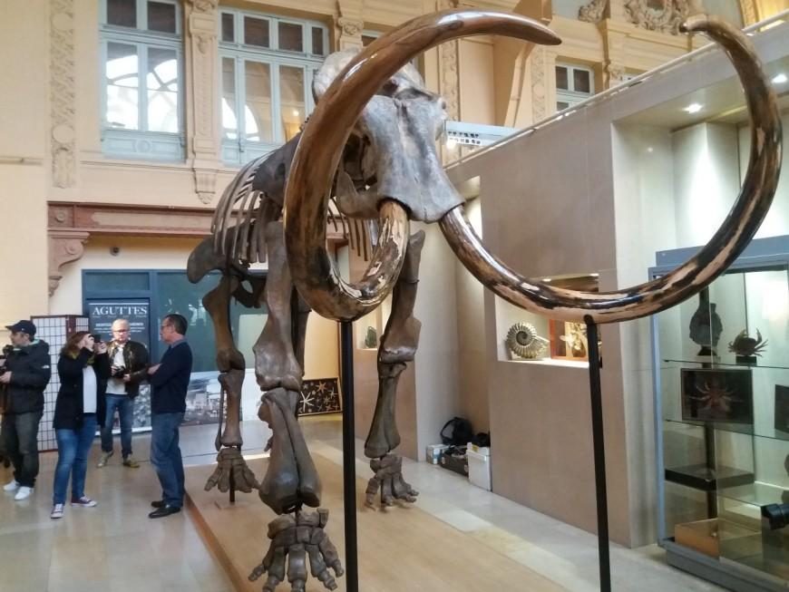 Lyon : un squelette de mammouth installé à la gare des Brotteaux - VIDEO