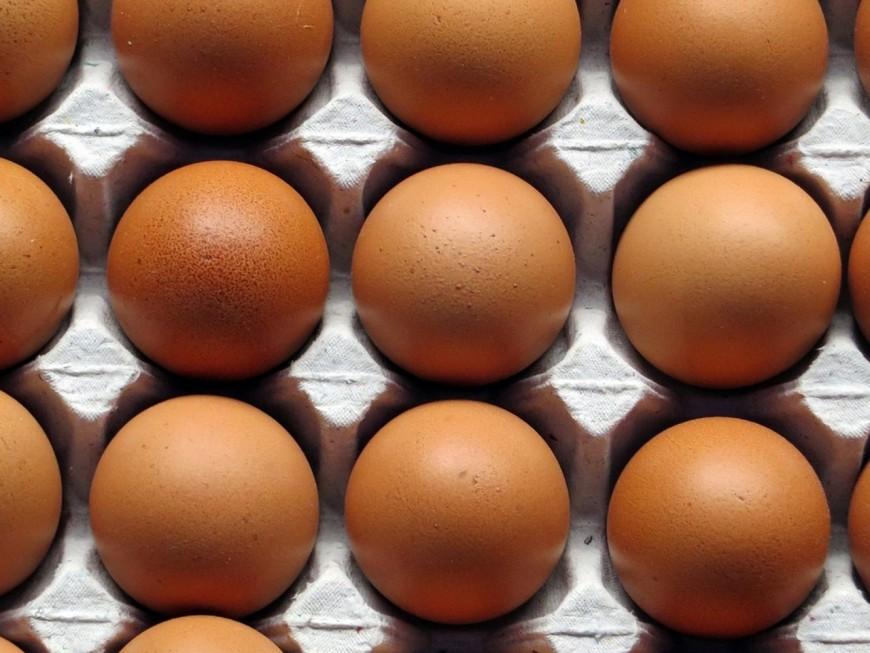 Des œufs contaminés au Fipronil livrés dans une entreprise du Rhône