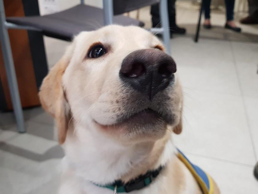 Lyon : un futur chien guide d'aveugle financé par des dons