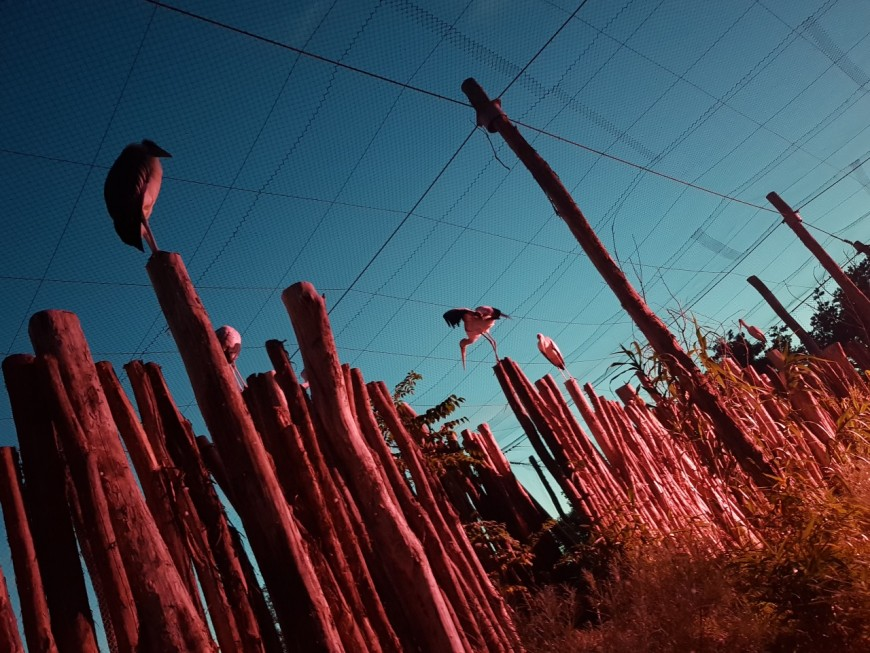 Pour s'adapter aux épisodes de canicule, le Parc des Oiseaux relance ses nocturnes