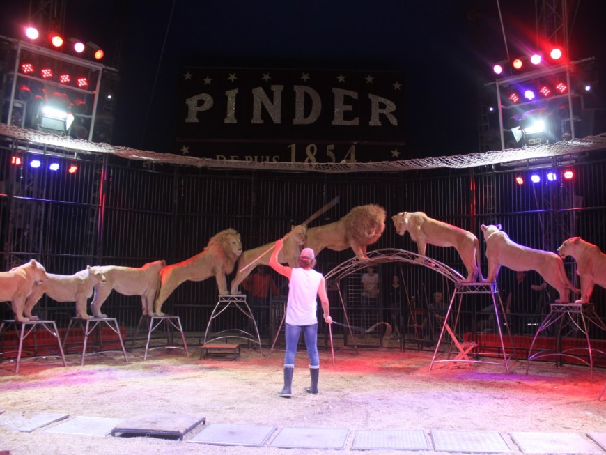 "Pinder: ""Un vrai cirque traditionnel avec sa ménagerie"""
