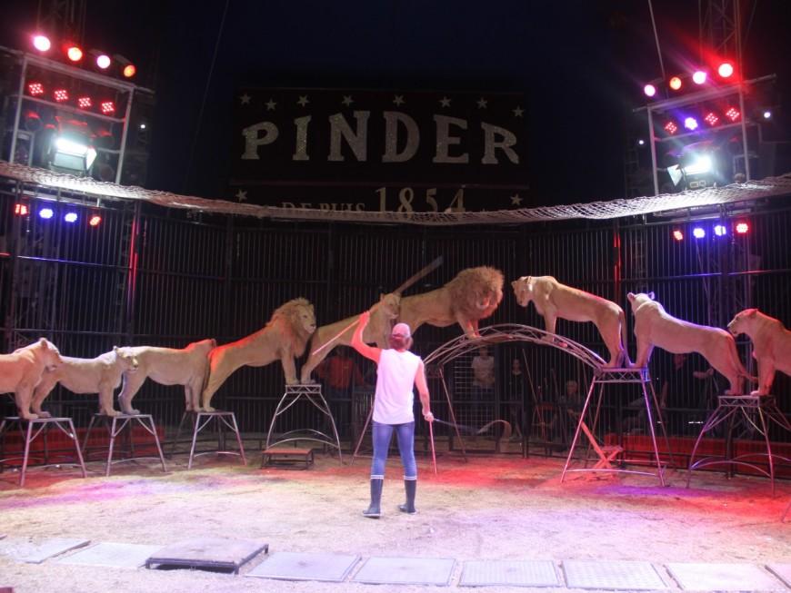 Lyon: le cirque Pinders'installe à Confluence du 7 avril au 1er mai