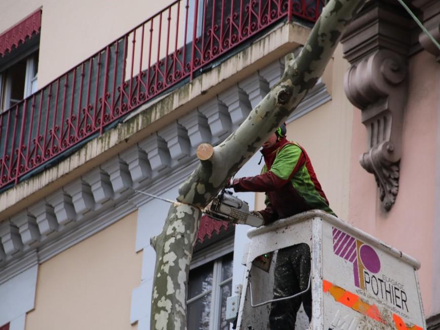 Lyon : Les arbres du quai Saint-Antoine se font faire une nouvelle coupe