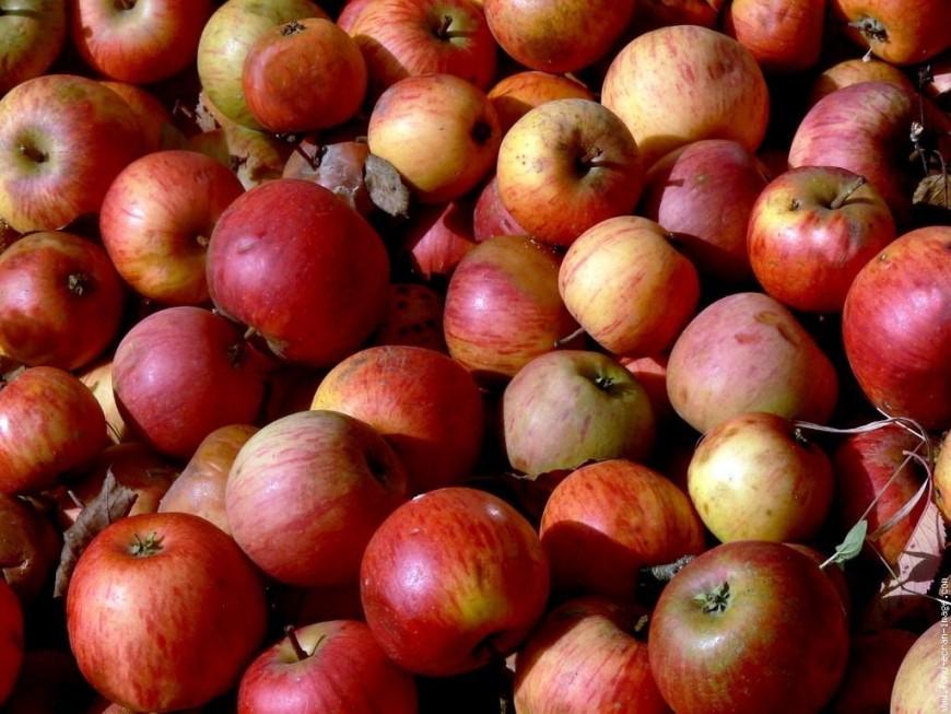 Lyon : des distributions de pommes pour promouvoir l'agriculture