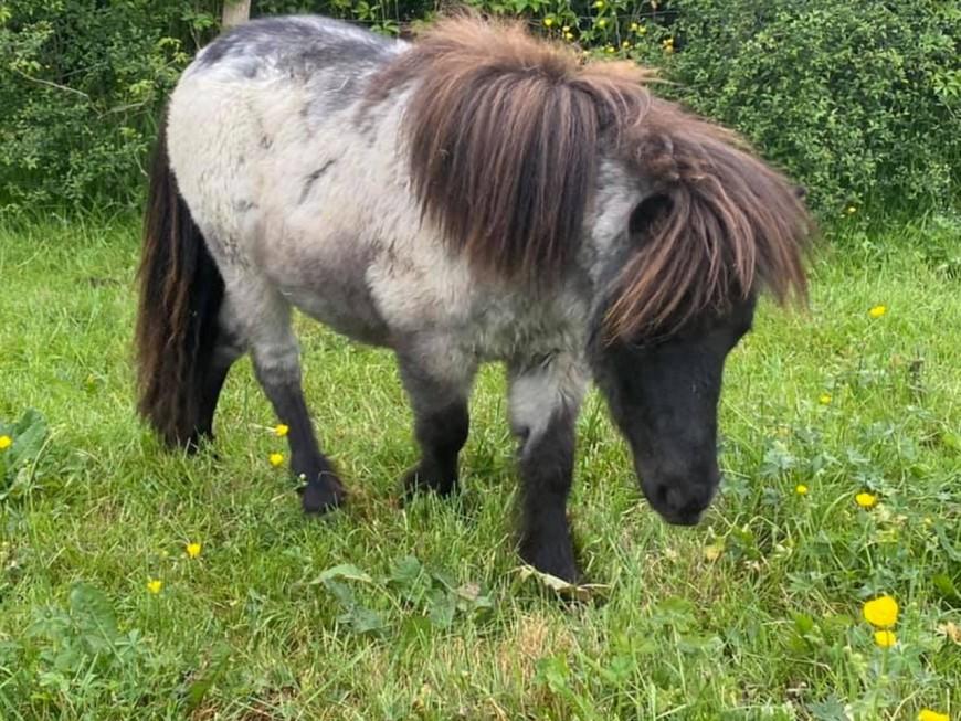 Le poney volé à Pusignan a été retrouvé