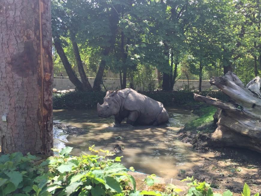 De nouveaux enclos pour les rhinocéros de Touroparc!
