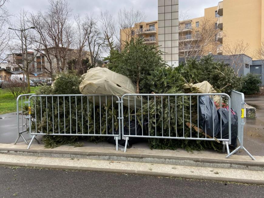 Lyon : dernier jour de la campagne de collecte et de recyclage des sapins
