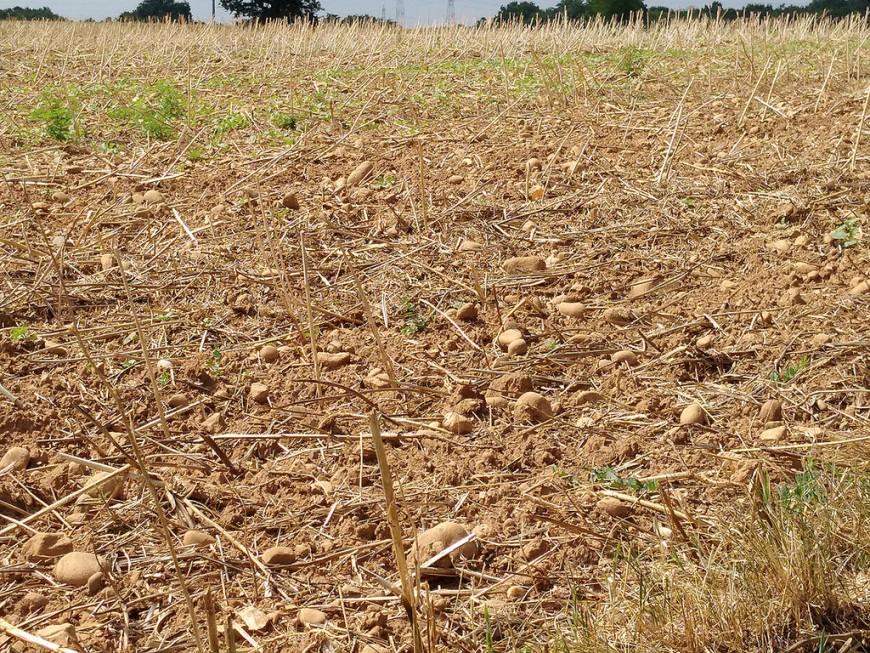 """Un risque de sécheresse """"très probable"""" dans le Rhône cet été"""