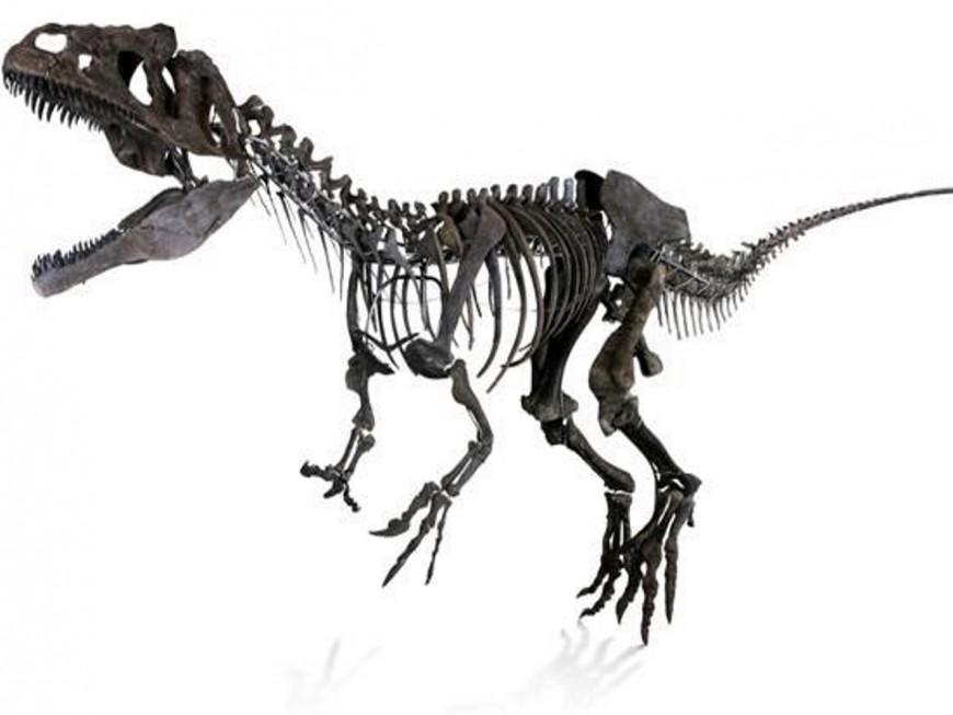 Le squelette d'une nouvelle espèce de dinosaure exposé à Lyon !