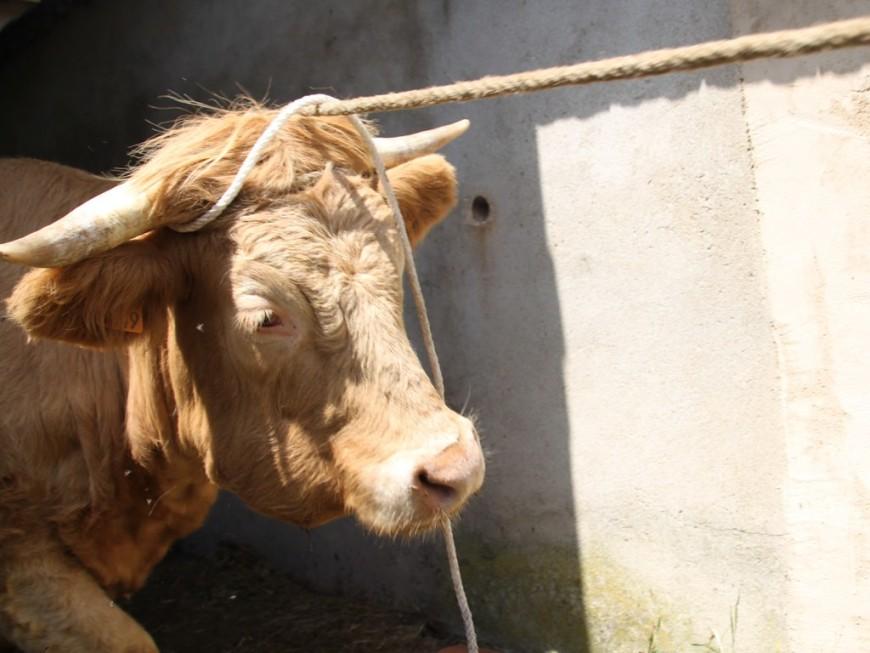 Rhône : un incendie cause la mort de quinze vaches
