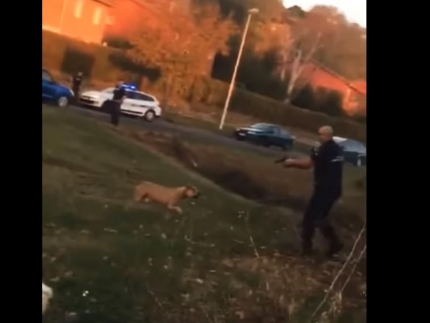 La police tire sur un chien dangereux près de Lyon, l'animal euthanasié (VIDEO)