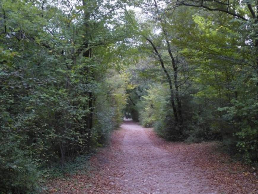 Vents violents : les parcs de la Tête d'Or, Gerland et Blandan fermés